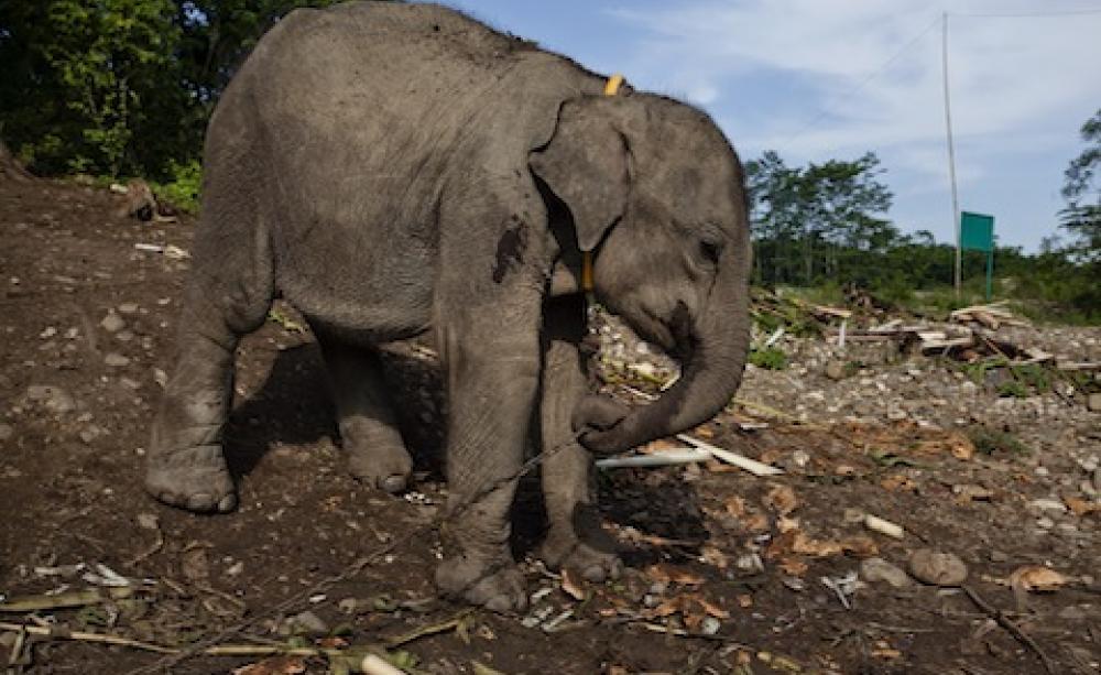 Palm Oil Elephants