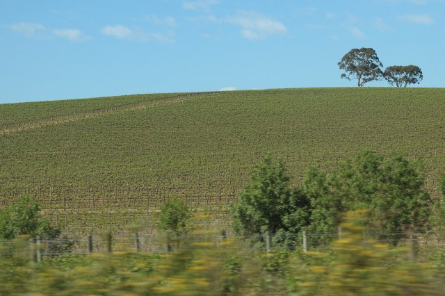 Clare Valley countryside