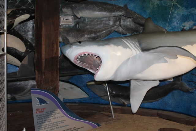 Shark exhibit at the Whale Centre