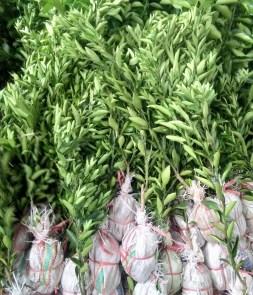 Jual bibit tanaman buah jeruk batu 55