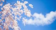 3月・4月は恋の展開スピードが上がるから要注意!?
