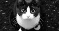 ニャにはともあれもネコがすべて!Cat is Everything!~ネコ大好き!愛すべき猫たちがいるアート~