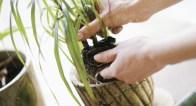 100均で買えるものがオシャレ植木鉢に変身!