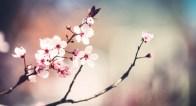 みんなに愛される!女性の魅力は「教養」でつくられる【桜にまつわる日本文化】