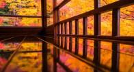 生きているうちに一度は見たい!京都の秋の絶景とは?【10月28日~11月1日】