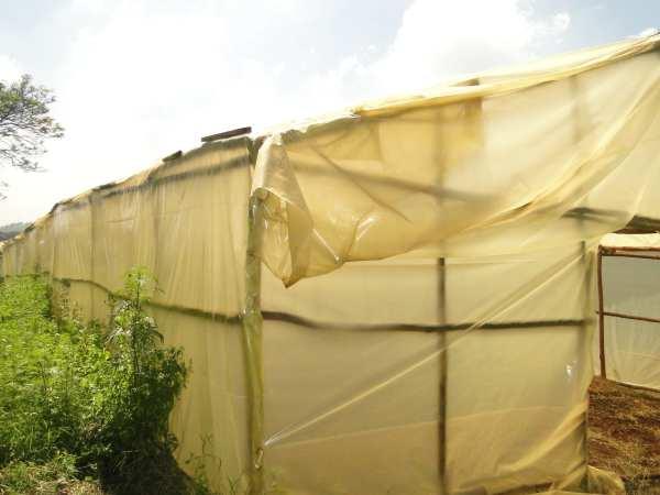 New greenhouse!