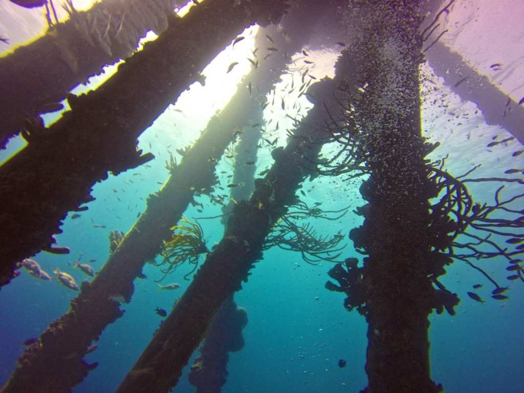 Scuba Diving with a GoPro
