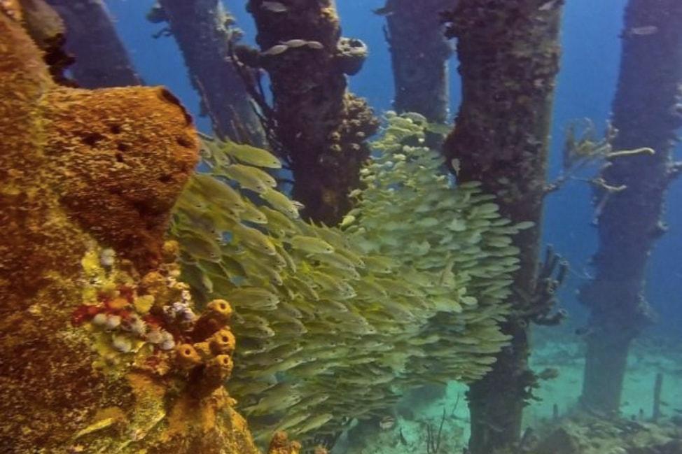 Bonaire diving at Salt Pier