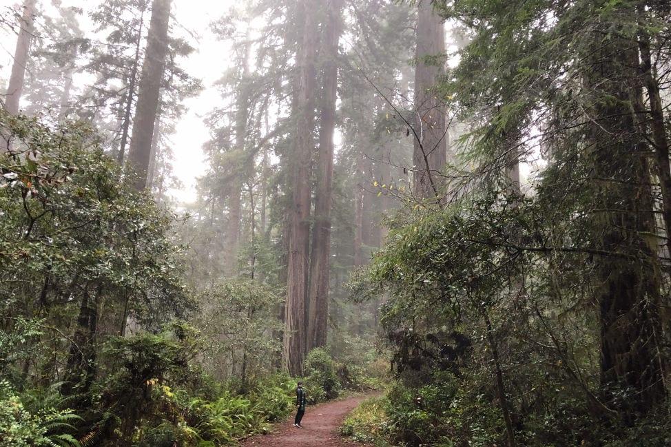 Angie Away Redwood National Park