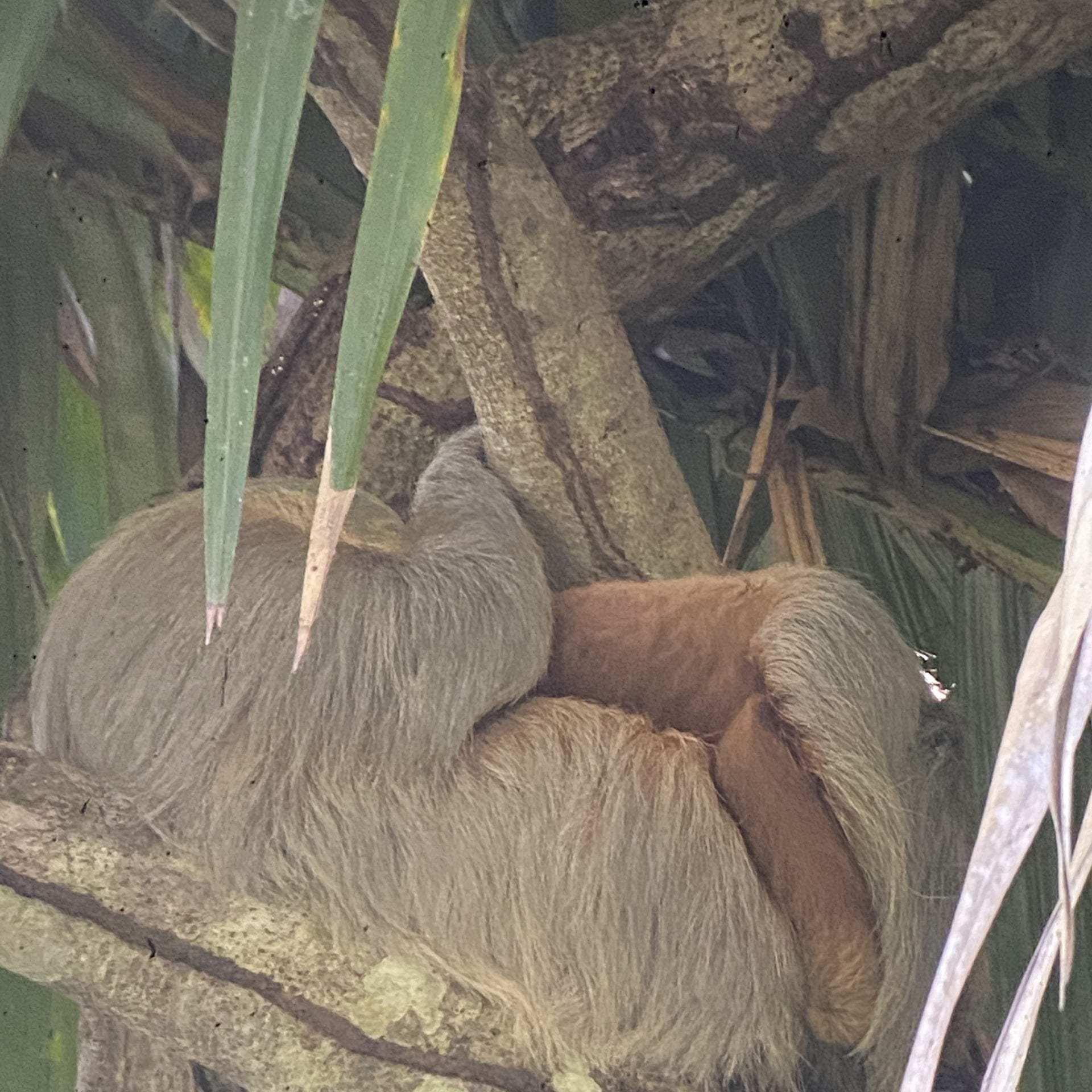 Animals in Manuel Antonio National Park