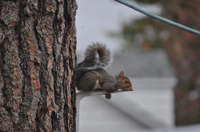 Wordless Wednesday – Yoga Squirrel