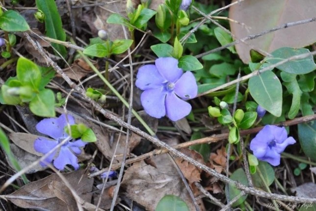Day 71 - Signs of Spring
