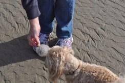 Tuesday Walk & Beach at Devil's Churn (44)