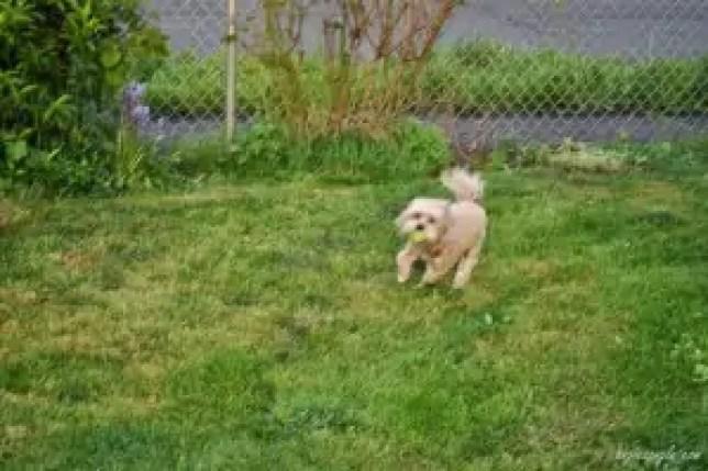 Active Outdoor Roxy (5)