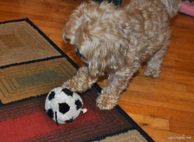 Wordless Wednesday–I Gots the BIG Soccer Ball–I am just like Daddy!