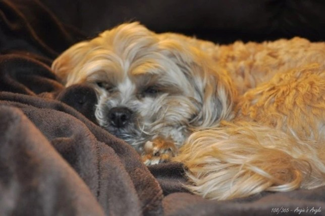 Day 108 - Cuddled Roxy