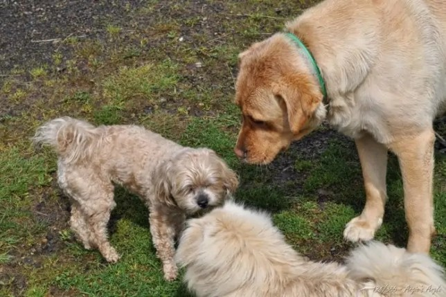 Day 124 - Doggy Meeting