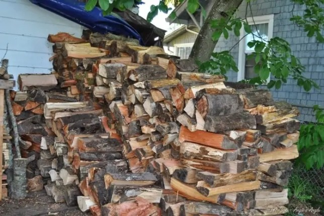 Day 146 - Start of our Woodstack