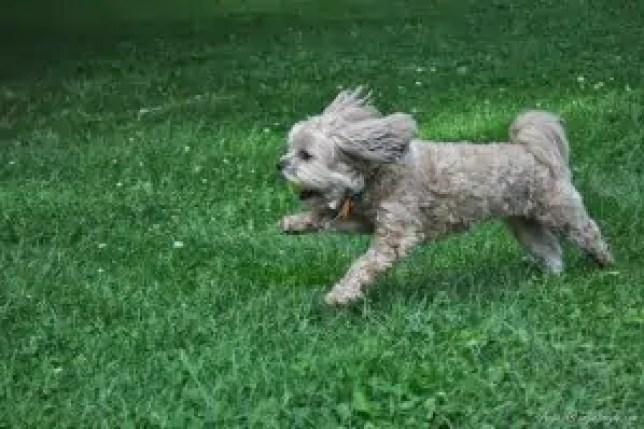 Roxy Playing Free (14)