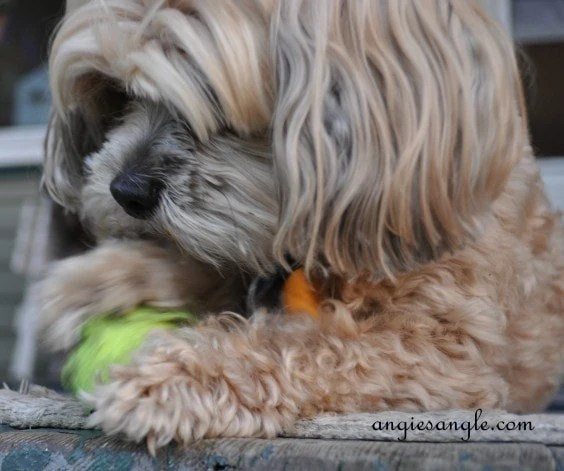 Wordless Wednesday - Roxy Batting the Ball (8)