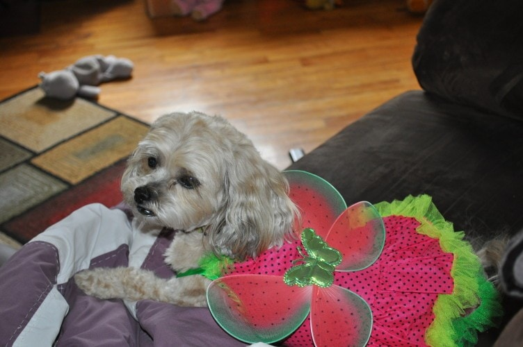 Dog Butterfly Halloween Costume