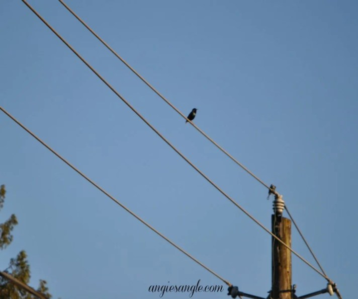 Catch the Moment 365 - Day 106 - Bird  Sitting on Wire