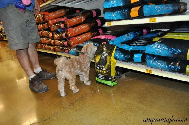 Switching Your Dog To A New Food - Purina ProPlan Bright Mind