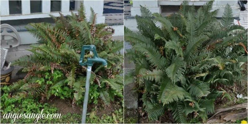 What The Front Outside Of Our House Looks Like Now - Ferns