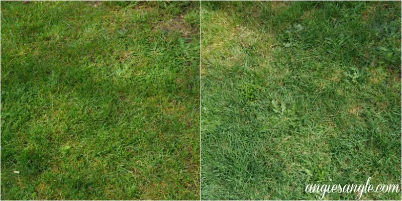 What The Front Outside Of Our House Looks Like Now - Grass