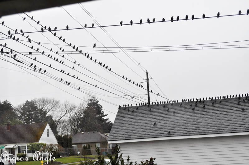 2017 Catch the Moment 365 Week 6 - Day 36 - Birds Invade