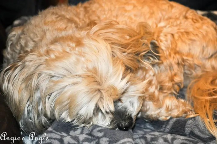 2017 Catch the Moment 365 Week 12 - Day 84 - Curled Ball Roxy