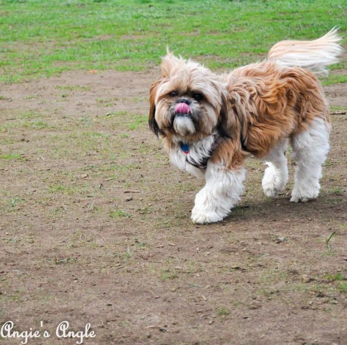 Roxy Has an Adventure to the Dog Park (1)