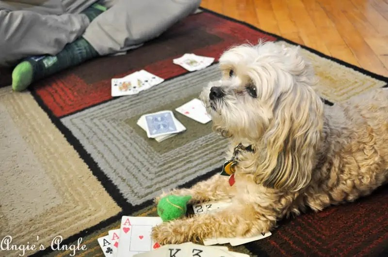 2017 Catch the Moment 365 Week 13 - Day 91 - Roxy in on Game Night