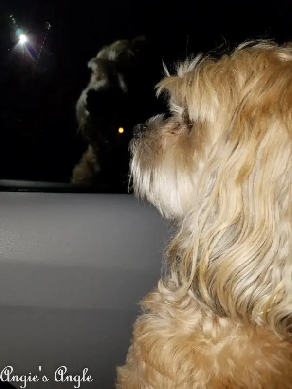 2017 Catch the Moment 365 Week 15 - Day 102 - Waiting on Daddy late at night
