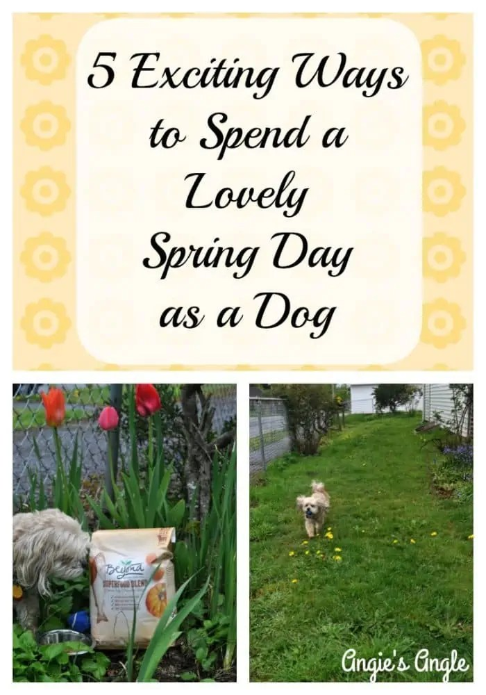 5 Exciting Ways to Spend a Lovely Spring Day as a Dog #RememberBeyond #ad