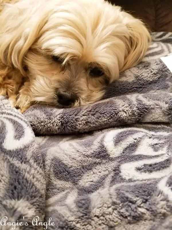 2017 Catch the Moment 365 Week 23 - Day 156 - Sleepy Roxy