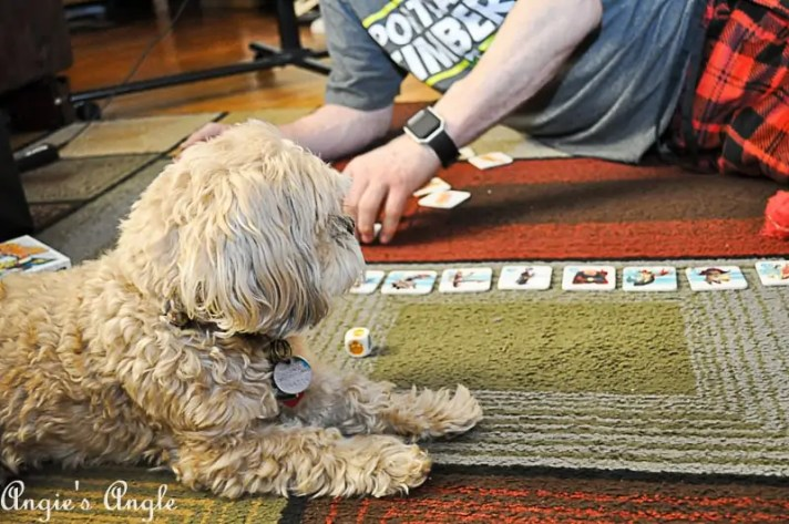 2018 Catch the Moment 365 Week 3 - Day 20 - Game Night with Yogi and Pow