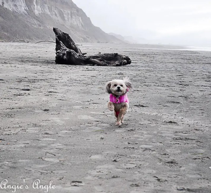 2018 Catch the Moment 365 Week 5 - Day 34 - Roxy Running Free on Beach