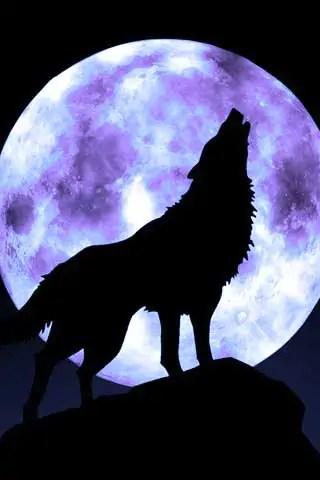 wolf and moon1 Faithful Moons