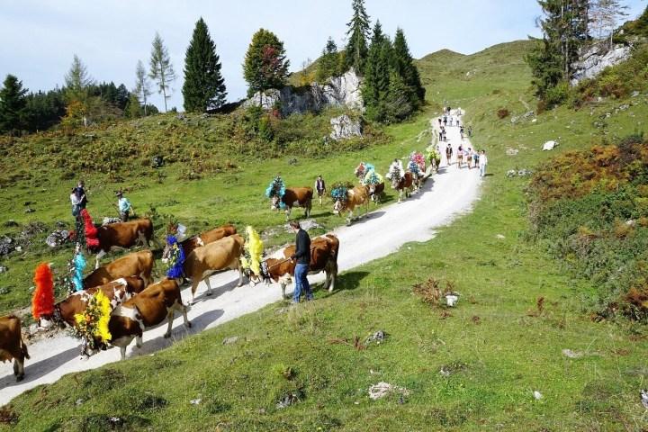 Salzburger Land Almabtrieb