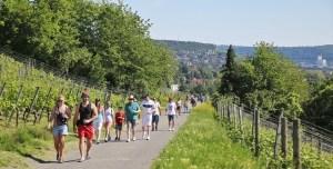 Veitshoechheim Weinwanderung, Winewalk, Weinschlendern