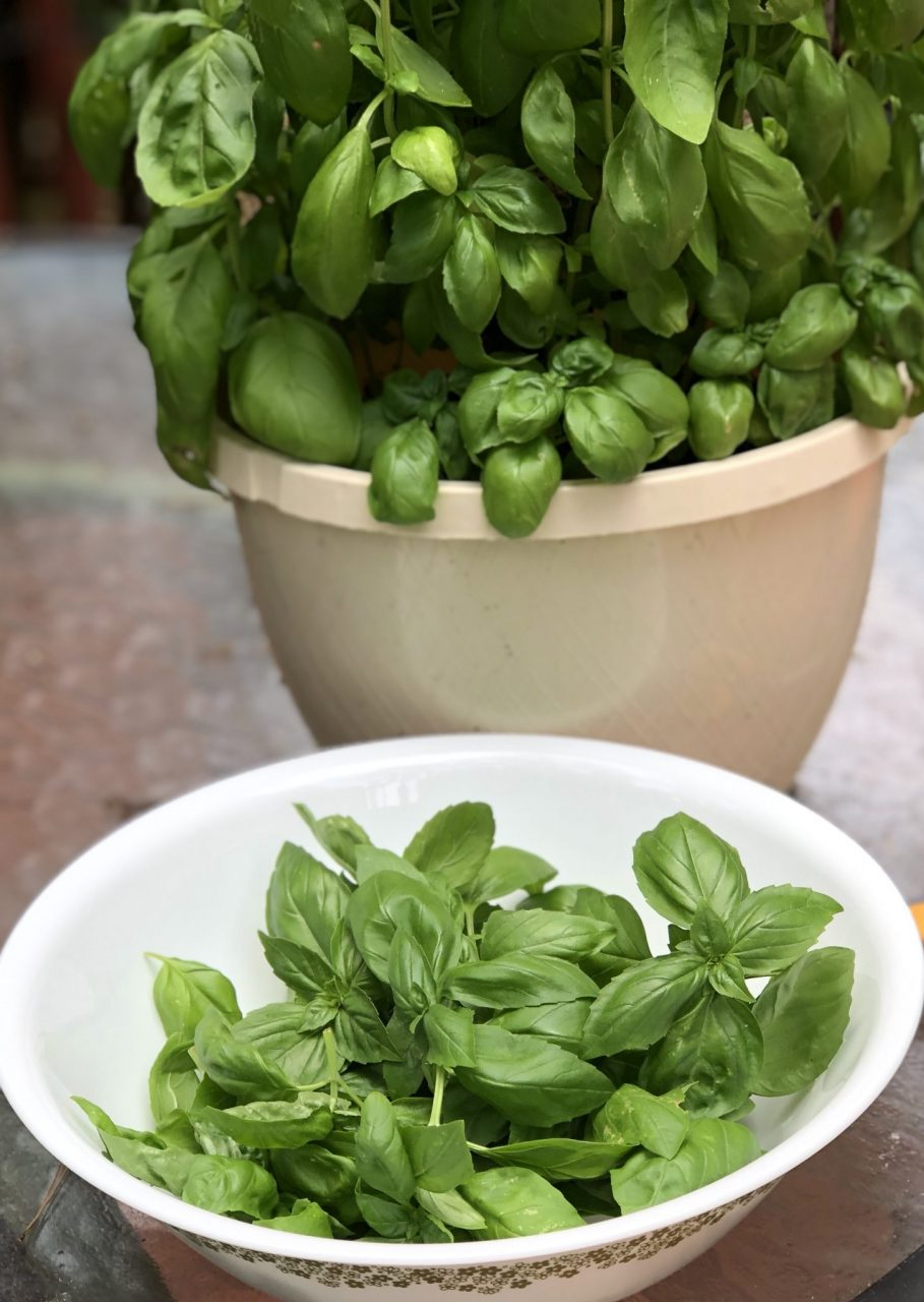 Basil Pesto preperation