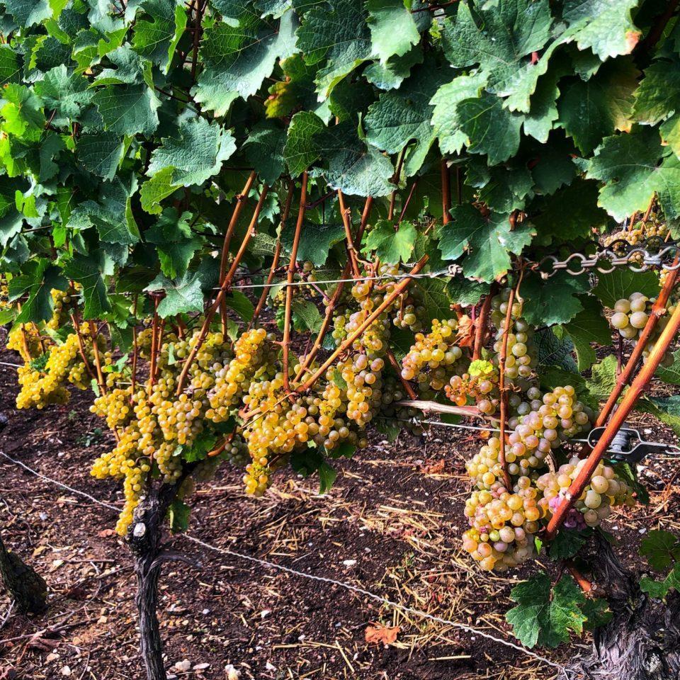 Volkach vineyards, Franconia