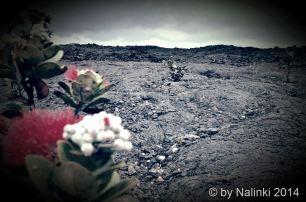 Hawaii Solitude