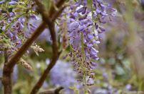 flowersoverflowers (1)