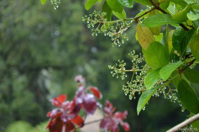 flowersoverflowers (5)
