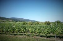 wine-wandering (6)