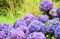 flowersoverflowers (6)