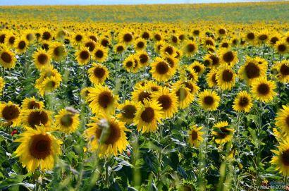 flowersoverflowers (7)