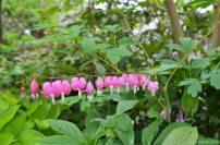 closeup-flower (2)
